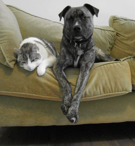 Cat and Dog on a Couch